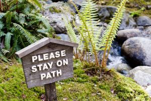 recovery skills and relapse prevention - stay on path